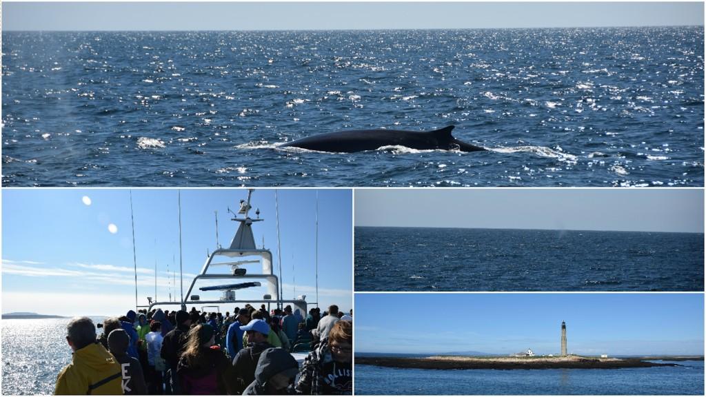 BarHarbor_WhaleWatching