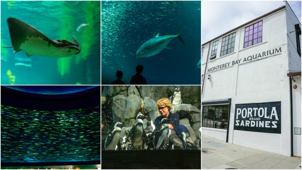 monterey_aquarium_1