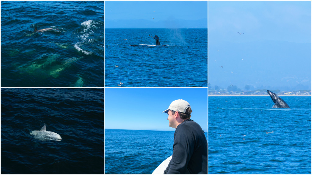monterey_whale_watching